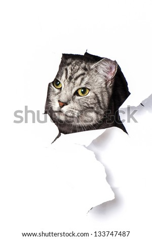Cat looks through a hole in paper - stock photo