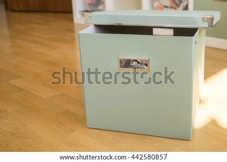 Cat looks up through a gap in box whilst playing hide and seek - stock photo