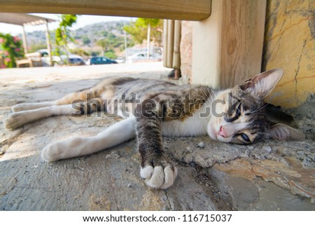 Cat lying in the street - stock photo