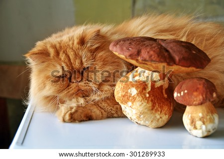 cat lying near mushrooms - stock photo