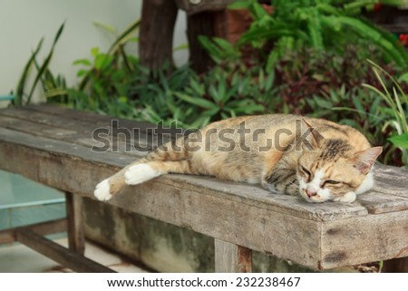 Cat lying on a wooden chair - stock photo