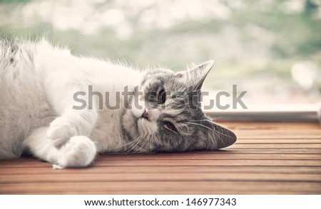 cat lying on a wooden platform while giving the sun - stock photo
