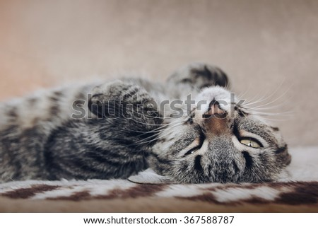 cat lying on soft bed and looking - stock photo