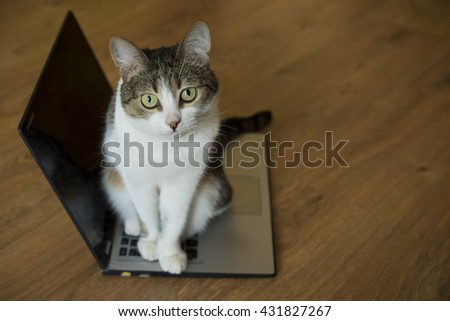 cat lying on the notebook at floor - stock photo