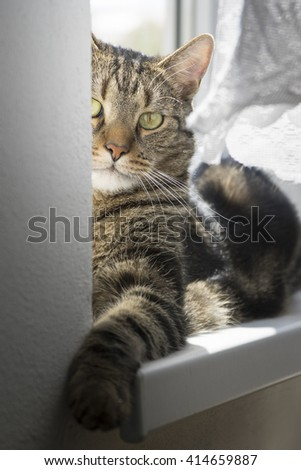 Cat lying on the windowsill. - stock photo