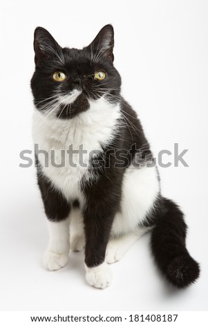 Cat model - stock photo