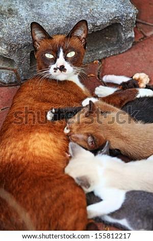 Cat nursing her kittens. - stock photo