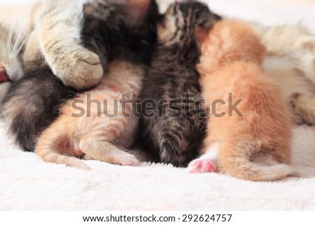 Cat nursing her little kittens, close up - stock photo