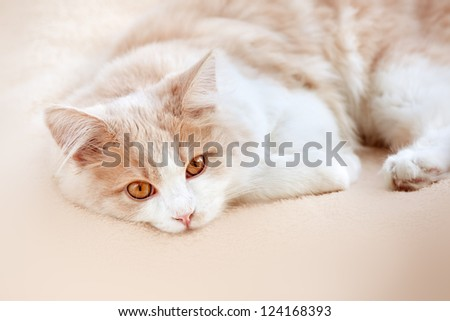cat on a beige background - stock photo