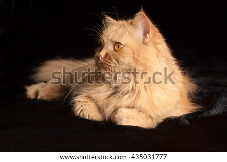 cat on a black background - stock photo