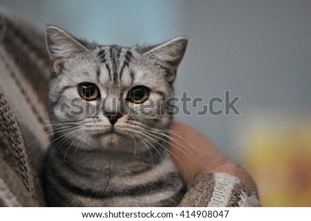 Cat on a colorful background  - stock photo