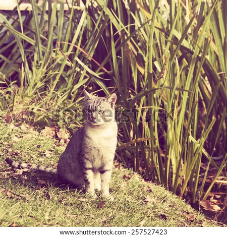 Cat on a grass.Special toned photo in vintage style - stock photo