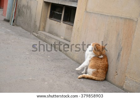 Cat on a path - stock photo