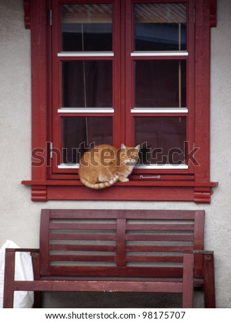 Cat on a red window at the chill - stock photo