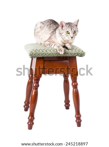 cat on a stool Isolated on white background - stock photo