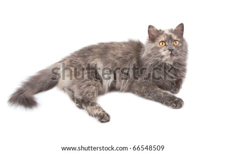 Cat on a white background. Isolated. - stock photo