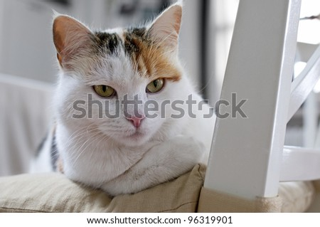 cat on a white chair - stock photo