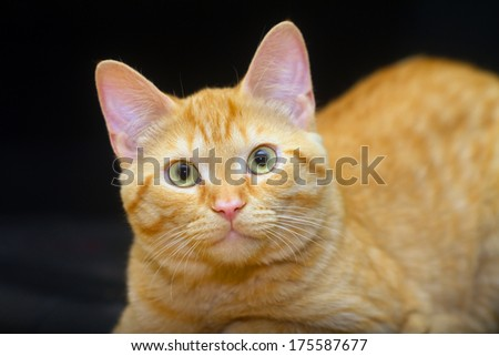 Cat on black background - stock photo