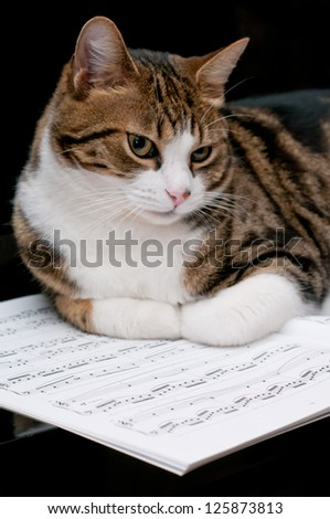 Cat on musical score - stock photo