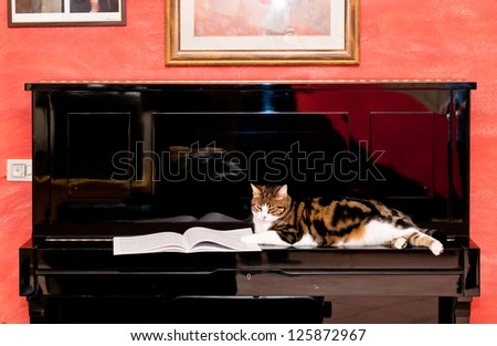 Cat on piano - stock photo