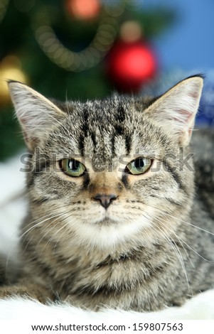 Cat on plaid on Christmas tree background - stock photo
