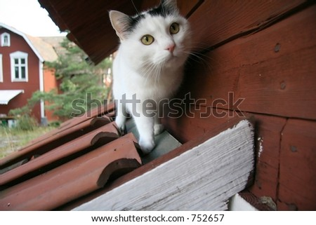 Cat on  roof. - stock photo