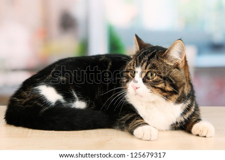 cat on table in room - stock photo