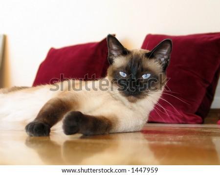 Cat on the floor - stock photo
