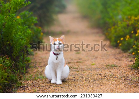 cat on the path foggy morning - stock photo