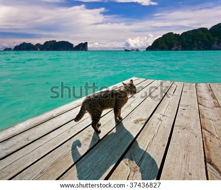 cat on the pier near the sea - stock photo