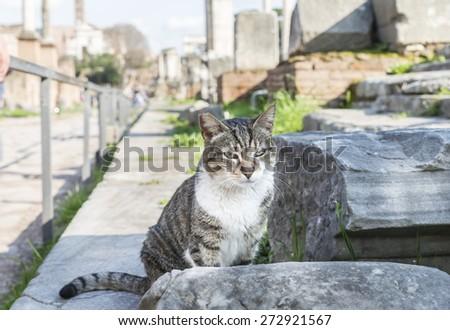 Cat on the stone. Roman Forum. Rome. Italy - stock photo