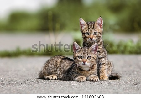 cat on the street - stock photo