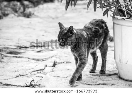 Cat on the street. Black and white photo - stock photo