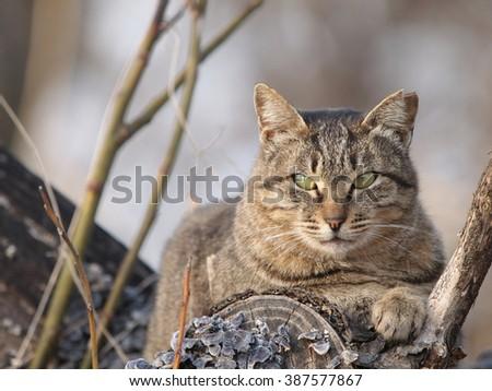 Cat on the tree - stock photo