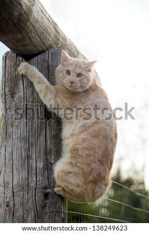 cat on top of a log against blue sky - stock photo