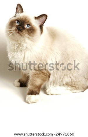 Cat on white background with soft shadow. Plenty of copy space beneath image. - stock photo