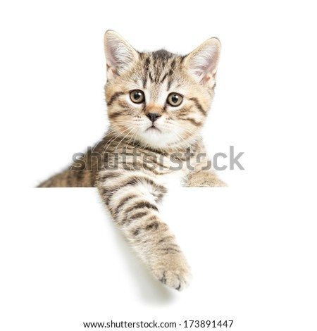 Cat or kitten isolated on white - stock photo