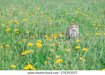 cat outdoor in nature - stock photo