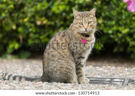 Cat outside. - stock photo