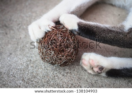 Cat paw with claws out play toy - stock photo