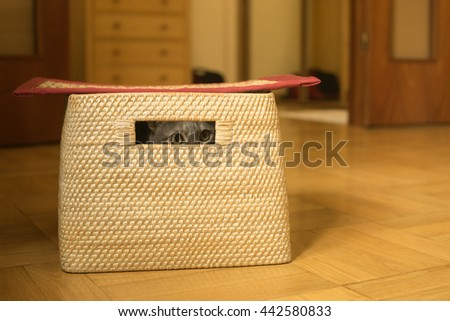 Cat playing hide and seek is peeking through a hole in a basket - stock photo