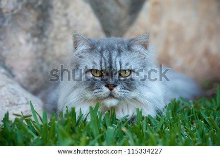 Cat playing on the grass close up - stock photo