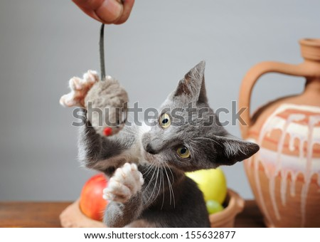 Cat playing with a plush mouse  - stock photo