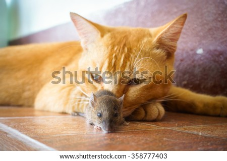 cat playing with rat at home. - stock photo