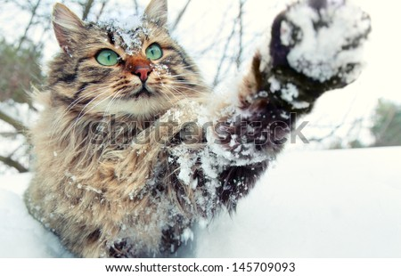 Cat playing with snow - stock photo