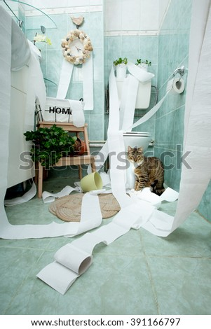 Cat playing with toilet paper in the bathroom  - stock photo