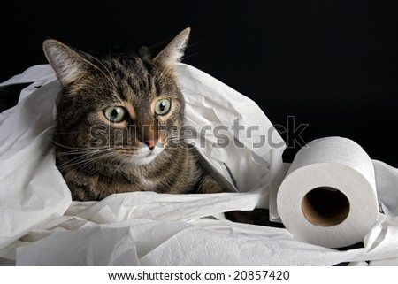 Cat playing with toilette paper - stock photo