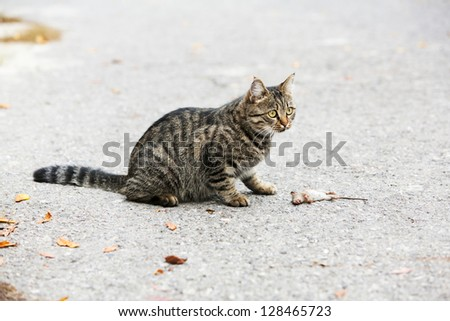 cat playing with trapped mouse in the yard - stock photo