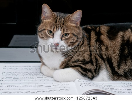 Cat, portrait - stock photo