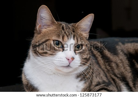 Cat , portrait - stock photo